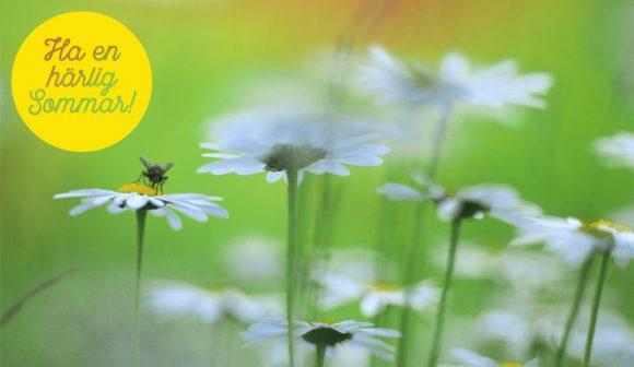 Fluga på en prästkrage - Ha en härlig sommar